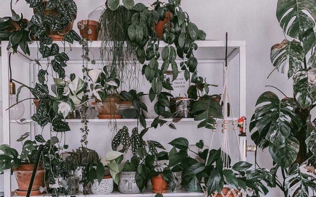 DS Podcast: planten zijn de nieuwe kinderen